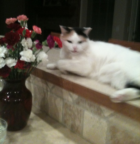 Guarding the flowers -- notice the ears!  And you thought they were yours...