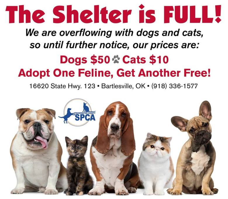 WCSPCA The Shelter is Full 2015